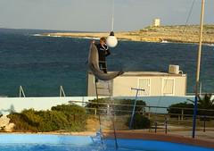 Il est faux que les dauphins doivent être tués quand un delphinarium ferme ses portes       Mediterraneo Marine Park --- Malta (CaptiveDolphins-vs-WildDolphins) Tags: malta dolphins shame delphinarium malte mediteraneo maltagozo marinelands mediterraneomarinepark captivedolphins themediteranneomarineparkinmaltaisashame unehonte unaverguenza dauphinscaptifs themediteranneomarineparkinsliemathemediteranneomarineparkinmalta themediteranneomarinepark dauphinsdelfines delfinescautivos