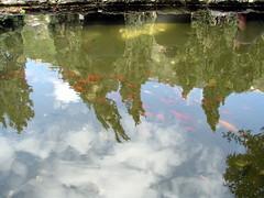 Reflection (Sigh Lens) Tags: fish reflection israel spring haifa   2009