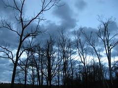 Wonder (frankieleon) Tags: blue trees sky storm clouds interestingness interesting bestof cloudy cc creativecommons popular weaher frankieleon