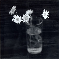 * (comeondimon) Tags: film darkroom print iso800 nikon ilfordfp4 silverprint nikkor50mmf12 mgiv microphen1260min