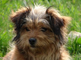 Find Out if Adopting a Dog is Right for You from the Parma Animal Shelter.