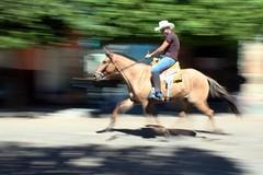 Panning (Josimar Serreira) Tags: minasgerais animal brasil natural photograph panning teste animais cavalo testando fotoemmovimento monteazul bemflickrbembrasil josimarserreira cavalocorrendo