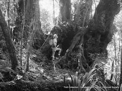 Box07-17 (geoffd) Tags: rainforest springbrook springbrooknationalpark antarcticbeech