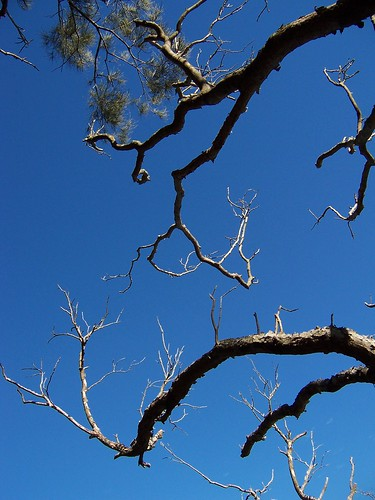Mangroves against a blue sky