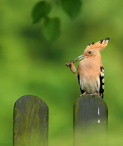 3811254622 d1331f3683 Beautiful Birds   The Splash of Colors!!!