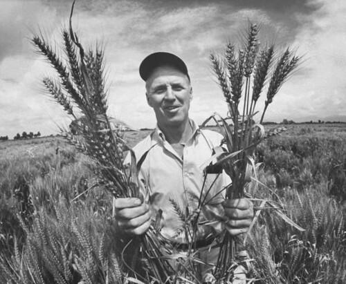 Norman Borlaug - LIFE