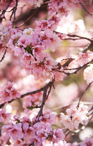 Floriade 09 - Blossoms Spectacular