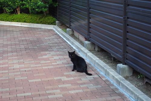 Today's Cat@20090920