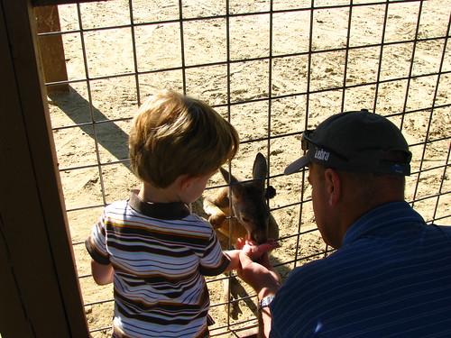 Keegan and Daddy feed the Kangaroo