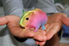 52 THEMES - WEEK 39 - RARE -  MONGOLIAN RAINBOW GERBIL ((^-^) SUE (^-^)) Tags: pet cute photoshop gerbil rodent gradient unusual rare mongolian week39 52themes