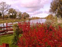 Fall at Göta Canal in Sweden #4