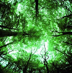 drowning (Back, and to the left) Tags: uk trees green 120 6x6 film mediumformat square xpro crossprocessed woods yorkshire leeds fisheye crossprocessing киев analogica colorshift guiseley velvia50 russiancamera analogico kiev88cm sooc fullframefisheye アナログ autaut arsat30mm flickr:user=backandtotheleft tumblr:user=thediaryofadisappointingman
