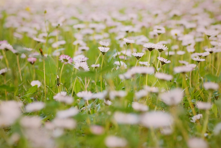 Kópia – kvet (9)