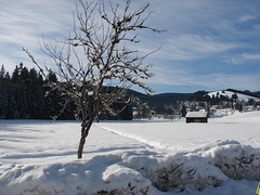 """The """"white""""Black Forest"""" (nelleke2 - Takes a long time to recover.) Tags: winter 2 love pool photos x your what faves invited blueribbonwinner my i winnerstrophy onlycomment httpwwwflickrcomgroupsblueribbonpool"""