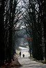 for a walk in the forest (j_wijnands) Tags: road trees silhouette forest d50 walking nikon toddler stroller mother capture awd amsterdamse nx waterleidingduinen sigma70300mmf456apodgmacro anawesomeshot pleasecontactmeifyouwanttouseapicturejeroenwijnandsatgmailcom kennemerlandzuid