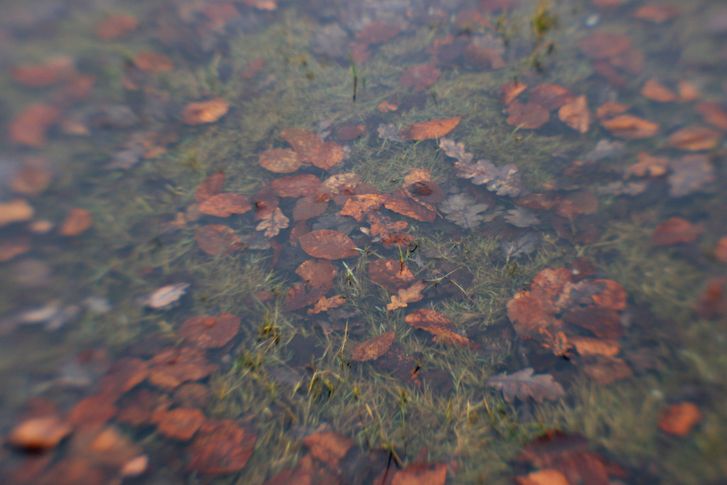blenheim landscape #2: leaf pool
