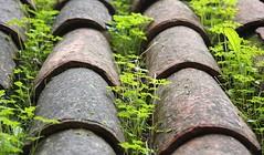 L'herbe sur le toit