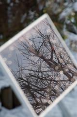 Faerie Lights ! (It's life Jim....) Tags: snow reflection tree bokeh misc solarpanel waterdrops msh scavenger ilovebokeh msh020912 msh0209