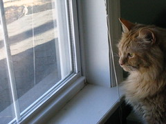 Jasper looking out the window