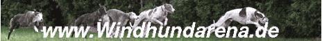 Über Windhunde, Hunde allgem. und dem Rest der Welt, aktuelle Giftköderwarnungen, riesiges Fotoalbum, Forum, bundesweiter Veranstaltungskalender, Pfötchenwiese, Windhundsport, Jeder-Hund-Rennen, Windhundrennvereine u.v.m.