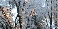 sun and snow2