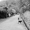 * (YENTHEN) Tags: street bw dogs taiwan taipei yenthen 0018584