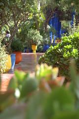 Jardin Majorelle - Marrakech (Lazzaro81) Tags: d50 nikon morocco marocco marrakech jardinmajorelle