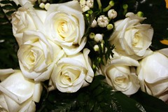 Rosa Bianca (Conanil) Tags: wedding white blanco rose branco toe boda rosa lisa bouquet casamento bianca mariage ramo hochzeit wit blanc matrimonio nam stefano huwelijk boeket stieg weis blumenstraus ramalhete
