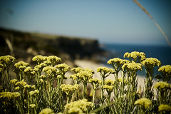 Naturaleza... (InVa10) Tags: flowers blue sea sky españa cliff brown flores beach portugal azul canon eos mar spain sand waves playa arena badajoz cielo vegetation spike 450 olas horizont acantilado horizonte meco vegetacion maron extremadura espiga inva 450d