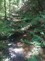 10 - Scenic Creek