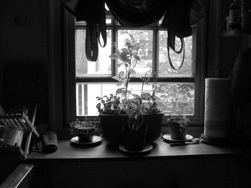 365 - kitchen