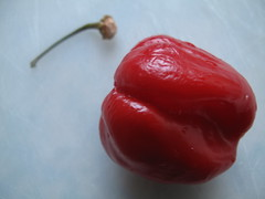One red hot chili