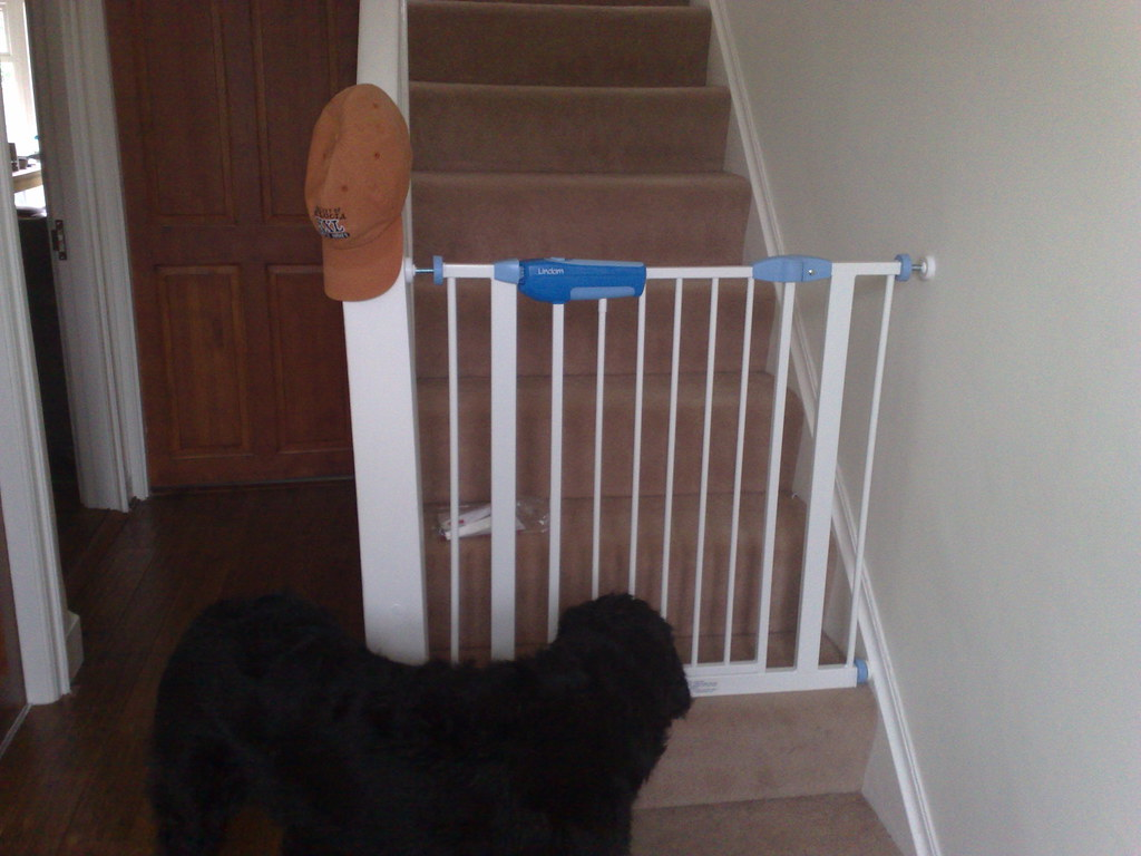 Barney's new baby gate