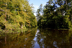 Bayou And Cypress Trees (Clay Ryan) Tags: reflections scenic bayou shade cypresstrees