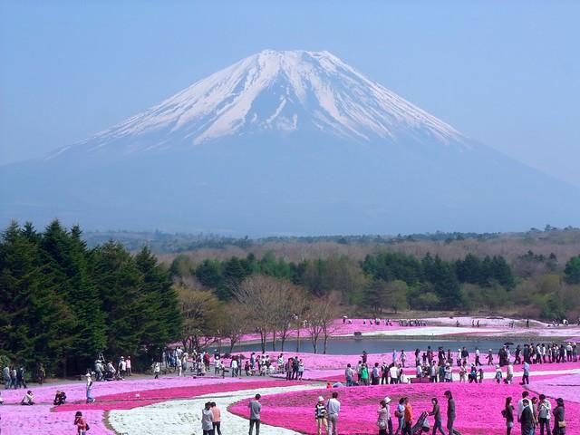 fuji kawaguchi hitsujiyama park mt fuji shiba-zakura