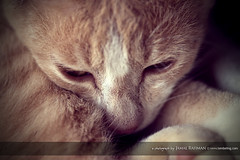 Don't wanna pose for you..... (Jamal Rahman) Tags: cat fur feline bokeh sleep curl boke kucing mengantuk