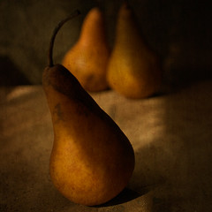 A celebration of pears (borealnz) Tags: light shadow texture fruit square golden three pears grunge scratches stems bsquare flypapertextures borealnz