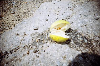 山上滿地掉落的柚子