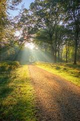 Into the light (Stu Meech) Tags: new autumn light mist green forest sunrise nikon stu path sigma 1020mm footpath hdr lightbeams meech photomatix d40