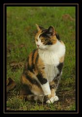 La tartarugata.. (Susy Maglione) Tags: pentax felini gatti animali