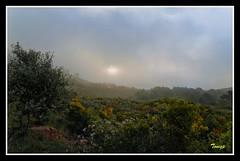 Niebla en el desierto de las Palmas (Tonigp) Tags: sol olympus nubes montaa zuiko niebla ocre nwn