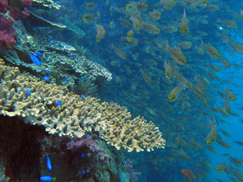 coralandfish