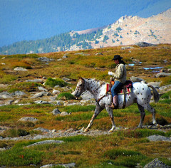 Ride the High Country (Sandra Leidholdt) Tags: horse usa mountains west america rockies caballo cheval us appaloosa cowboy colorado unitedstates dude explore american western rockymountains 14er frontrange rider dappled cavalli equestrian horseback goodlooking americanwest horsebackriding equine mountevans mtevans chevaux highcountry horseman amricain gelding rockymountainhigh explored ridethehighcountry sandraleidholdt saddlehorse leidholdt sandyleidholdt