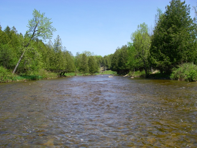 Saugeen River trout section