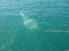 Net Trawling, Persian Gulf