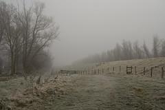 Dijk in de mist (Dimormar!) Tags: mist fog frozen hoogvliet proficiat ddd5 dolledokadonderdag