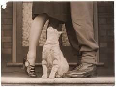 Soldier's goodbye & Bobbie the cat, Sydney, ca. 1939-ca. 1945 / by Sam Hood (State Library of New South Wales collection) Tags: people woman man cute art love feet look animal cat soldier army mujer orangecat feline shoes kiss war funny couple chat chica sweet amor peekaboo watching pussy steps kitty zapatos gato kitteh oxford porch upskirt heels heel neko chico goodbye vela curiosity sko sort pussycat despedida beso hombre digger soldat anzac 貓 shiu joven besos katt felis sapatos zapato toomanytags tiptoes workboot hvit olhando felidae escalón tacón statelibraryofnewsouthwales orangenesses xmlns:dc=httppurlorgdcelements11 samhood captionable bokehfocus commons:event=commonground2009 dc:creator=httpnlagovaunlaparty587349