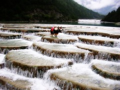 Artificial water terraces (Melinda ^..^) Tags: china yak water field animal river stair terraces artificial mel melinda yunnan lijiang jadedragonmountain mywinners waterterrace goldstaraward chanmelmel