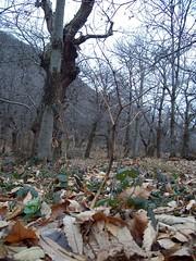 piccoli alberi crescono (Boccon, Veneto, Italy) Photo