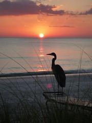 Watching the Sunset (rosscrawford1) Tags: sunset sea sun bird beach gulfofmexico nature grass silhouette closeup geotagged seaside key florida crane longboat fl redsky casadelmar sunlounger perfectsunsetssunrisesandskys